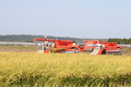 金沢大地の有機米の刈り取り・複数台の大型機械で効率よく刈り取り