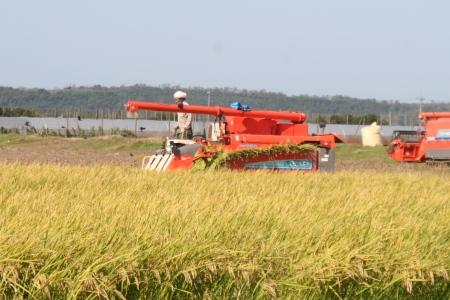金沢大地の有機米の刈り取り開始!