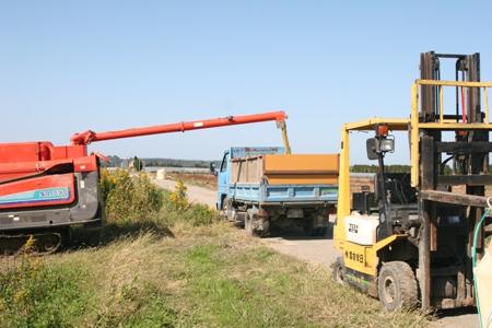 金沢大地の有機米の刈り取り・刈り取り機械、トラック、などなど、農場スタッフは連携プレー