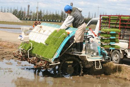 2009年有機米の田植え